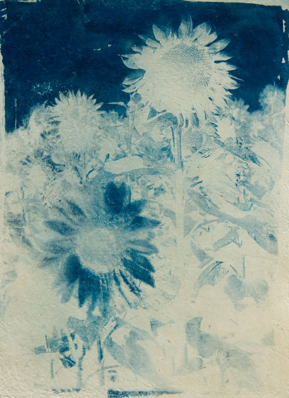 "Blue Summer I | Cyanotype on hand-made paper (18"" x 16"")"