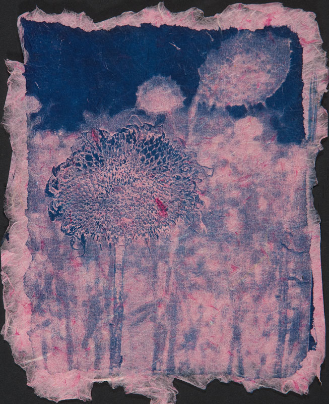 "Summers End | Cyanotype on hand-made paper (16"" x 14"")"